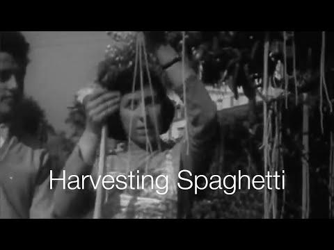 BBC: Spaghetti-Harvest in Ticino