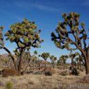 Ein Zuhause in der Wüste – Keys Ranch, Joshua Tree National Park, Kalifornien