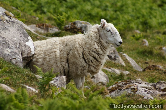 Isle of Skye (5)