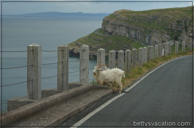Great Orme (4)