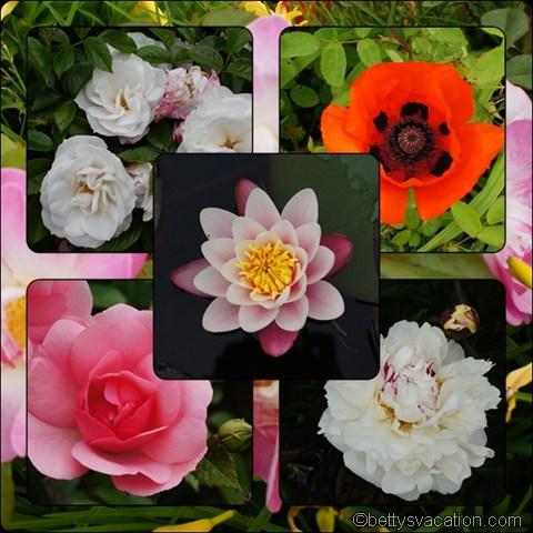 Nunwell Flowers