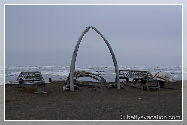 Barrow Whales
