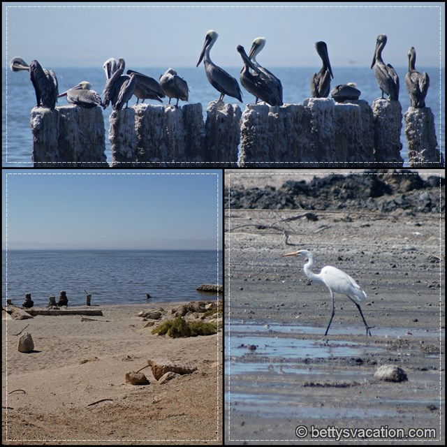 Bombay Beach Collage 1