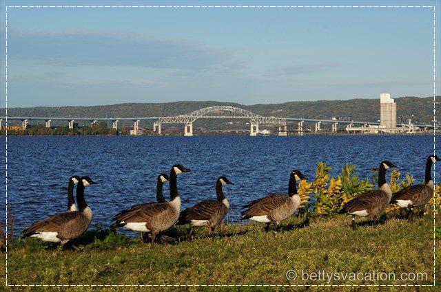 Bridge & Canada Geese