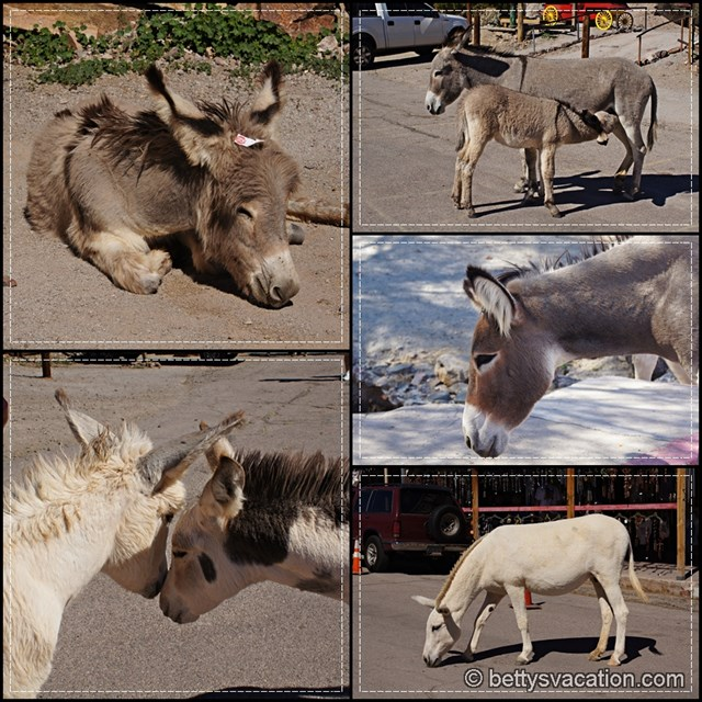 Oatman Burrows Collage 1