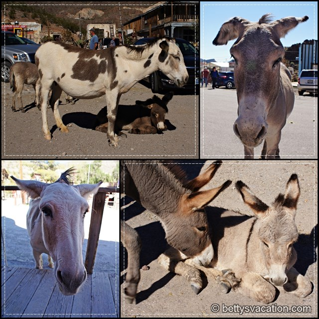 Oatman Burrows Collage 2