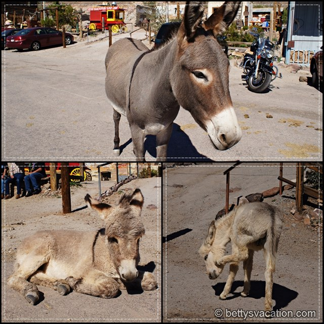 Oatman Burrows Collage 3