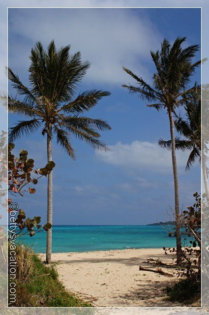 Bermuda Coast 2