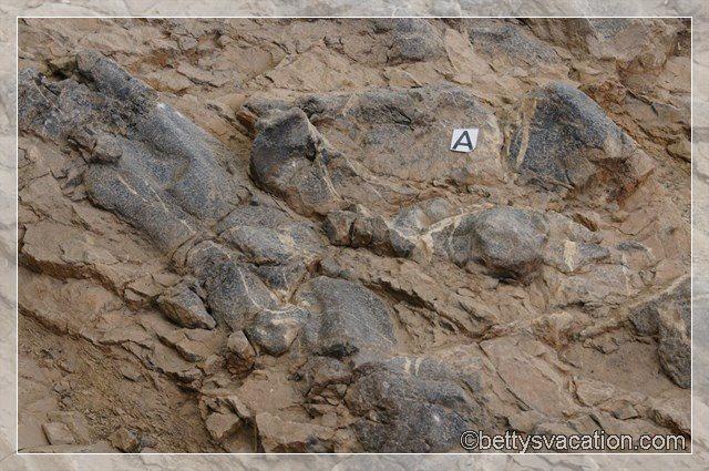 42 - Berlin - Ichthyosaur SP