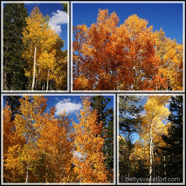 Collage Herbstlaub Great Basin NP