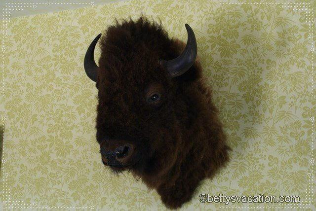 18 - Buffalo Head