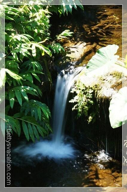 Akaka Falls SP 9