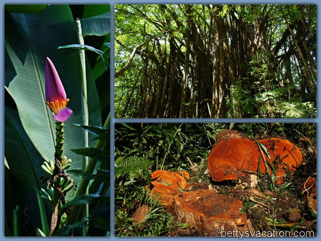 Akaka Falls SP Flora