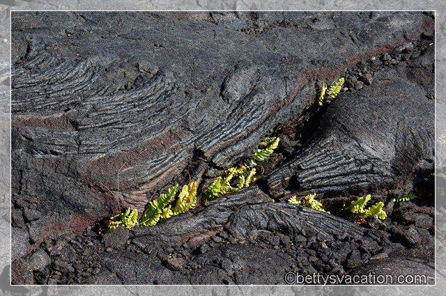 42 - Volcanoes NP