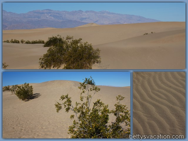 9 - Mesquite Flat Sand Dunes