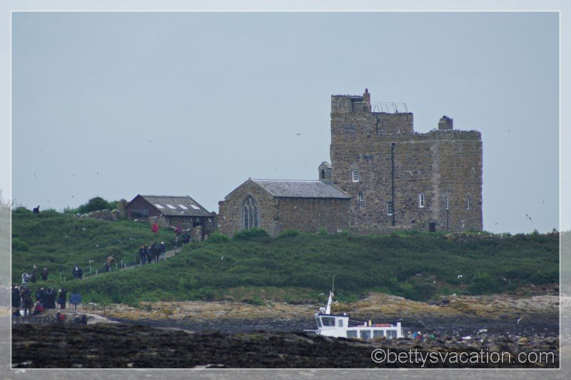 33 - Farne Islands