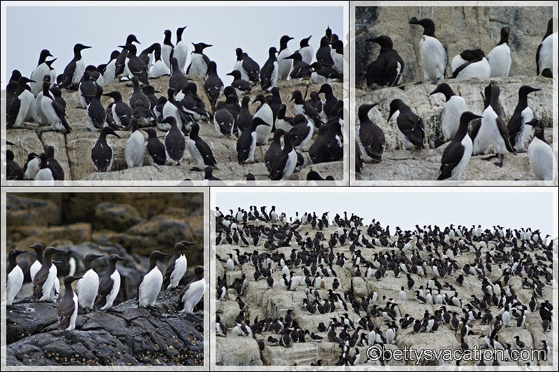 34 - Farne Islands