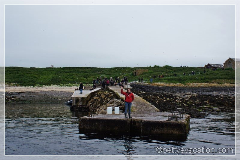 43 - Farne Islands