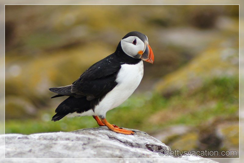 48 - Farne Islands