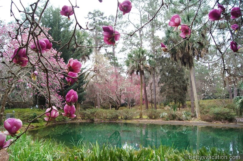 12 - Alfred B. Maclay Gardens State Park