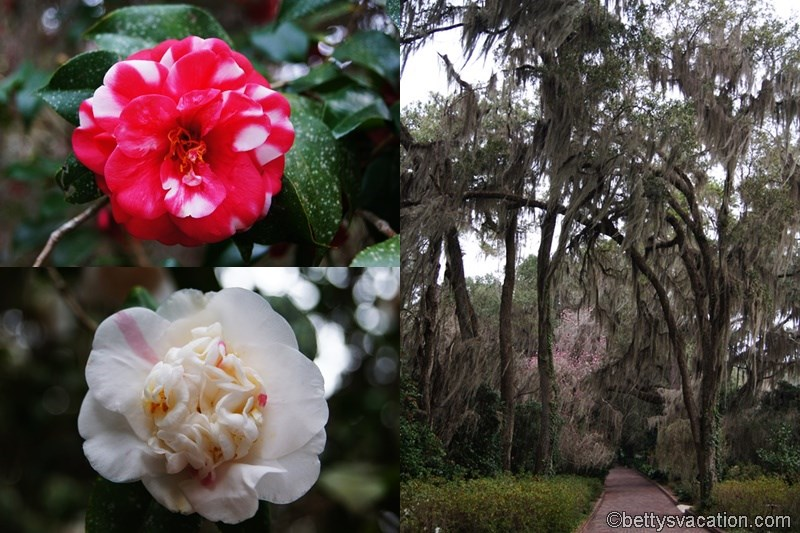 3 - Alfred B. Maclay Gardens State Park