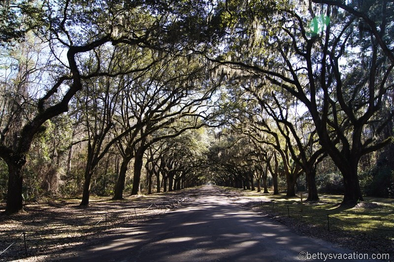 33 - Wormsloe Historic Site