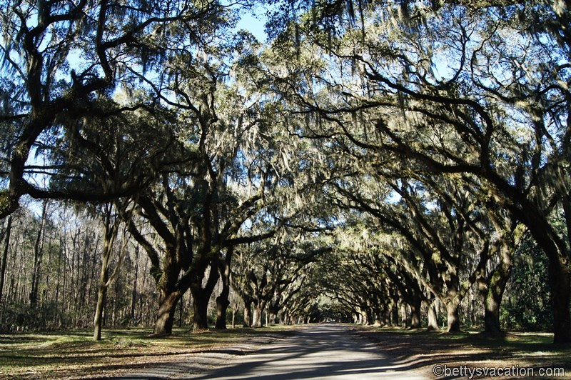36 - Wormsloe Historic Site